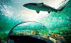 """O aquário Ripley do Canadá """"Dangerous Lagoon"""" permite aos visitantes ver tubarões, tartarugas verdes e outras formas de vida marinha, num túnel subaquático com uma calçada em movimento. (CNW Group / Ripley's Aquarium of Canada LP)"""