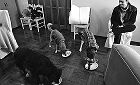 Com a nova lei não será possível ter três cães num apartamento. (PILAR OLIVARES/REUTERS)