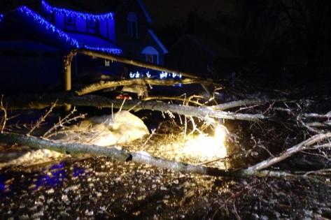 Luzes iluminam uma árvore caída em Brampton - 22 de dezembro de 2013. Cortesia da família McCann
