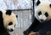 Foto: Calgary Zoo